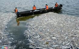 Hà Nội công bố nguyên nhân cá chết hàng loạt