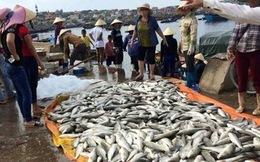 Lấy mẫu nước tìm nguyên nhân cá chết ở Tĩnh Gia, Thanh Hóa