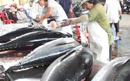 Xuất khẩu cá ngừ của Việt Nam khởi sắc