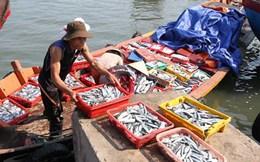 Tiếp thị thuốc tràn làn, cảnh báo dư lượng kháng sinh trong thủy sản
