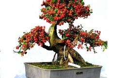 Quanh năm gặp điều bất hạnh vì lỡ trồng 5 loại cây này trong nhà
