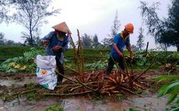 Mưa lớn, nông dân tất tả thu hoạch nông sản