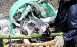 Thiên tai đe dọa xuất khẩu thủy sản