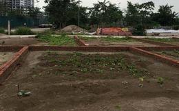 Tuyên Quang: Đấu giá sai quy định hàng trăm lô đất