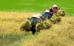Chuyên gia kinh tế Phạm Chi Lan: Không thể để nông nghiệp mãi thiệt thòi!
