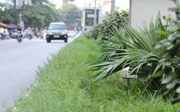 """Đường phố Hà Nội """"nhếch nhác"""" khi dừng cắt cỏ"""