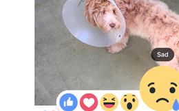 Facebook ra Like, Love, Haha, Wow, Sad, Angry trên toàn cầu, có cả Việt Nam