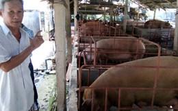 Giá lợn giảm mạnh, người nuôi gặp khó
