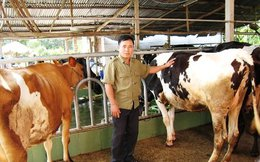 Vinamilk đồng ý mua toàn bộ sữa cho nông dân Củ Chi