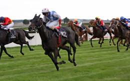Điểm chung giữa Thị trường chứng khoán và trường đua ngựa