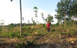Bình Phước: Phát hiện gần 10.000 ha đất bị lấn chiếm trái phép