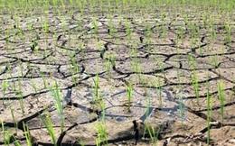 Khô hạn ở Nam Trung Bộ sẽ khốc liệt hơn năm 2015
