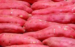 Giá khoai lang tím tăng vọt