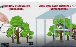 Accelerator. Vườn ươm tăng tốc khởi nghiệp là gì?