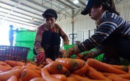Tăng hàng cho miền Trung, giá rau tăng vọt