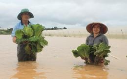 Lũ nhấn chìm hoa màu, nhà cửa... gây thiệt hại hàng tỷ đồng ở Lâm Đồng