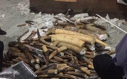 Ngà voi chứa trong 2 container gỗ nhập khẩu có trọng lượng hơn 600 kg