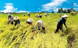 Năng suất nông nghiệp Việt Nam chưa bằng một nửa Hàn Quốc, Trung Quốc cách đây 30 năm