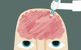 """8 sự thật ai cũng cần biết về bộ não """"nhớ nhớ, quên quên"""" của chúng ta"""