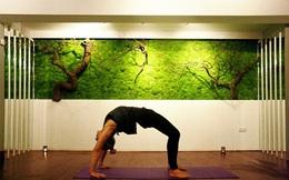 Tường gạch thô cứng đã lỗi thời, tường cây xanh xu hướng mới của cuộc sống hiện đại