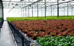 Đầu tư vào nông nghiệp công nghệ cao tại TP.HCM: Không dễ!