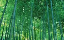 Sau 2 tháng mua vào, Thành Vũ Tây Ninh muốn bán ra 10 triệu cổ phiếu Bamboo Capital