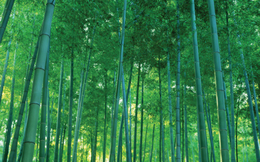 Thành Vũ Tây Ninh tiếp tục muốn thoái bớt vốn tại Bamboo Capital