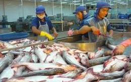 Hiệp hội cá Tra dừng xác nhận đăng ký hợp đồng xuất khẩu cá tra