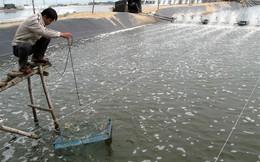 Thu hồi hơn 1,1 tỷ đồng trong vụ làm giả công văn của Tổng cục Thủy sản