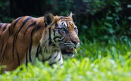 """Indonesia - """"Con hổ"""" vừa tỉnh giấc của châu Á"""