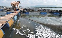 Cần cứng rắn hơn với công tác kiểm tra nguồn thải tại các lưu vực sông