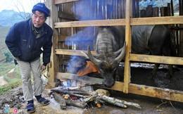 Gần 1.000 gia súc chết trong đợt rét kỷ lục
