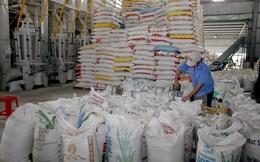 Giá lúa gạo tại Đồng bằng sông Cửu Long liên tục giảm mạnh
