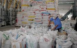 Xuất khẩu gạo khó đạt mục tiêu dù đã hạ chỉ tiêu xuống thấp