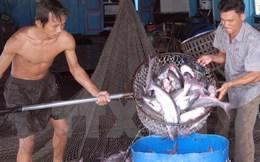 Tôm nuôi được giá, sản xuất cá tra chưa thoát khỏi khó khăn