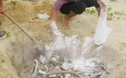 Hà Tĩnh tiêu hủy gần 12 tấn hải sản không đảm bảo an toàn