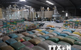 Xuất khẩu gạo trong tháng Hai vượt kế hoạch 400.000 tấn