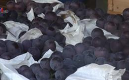 Vì sao trái cây Trung Quốc luôn có giá rẻ?