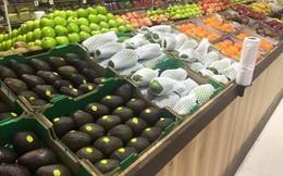 Xoài Việt lần đầu bán ở Australia, giá 250.000 đồng/kg