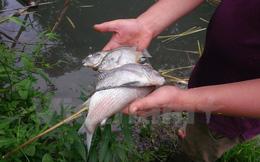 """Ai đã """"đầu độc"""" tôm cá ở đầu nguồn dòng suối chảy vào sông Đà?"""