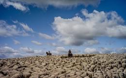Cuộc sống chăn cừu ở nơi 'tận cùng' của thế giới