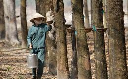 Cao su Hòa Bình (HRC): Năm 2016 lãi ròng 9 tỷ đồng vượt 52% kế hoạch