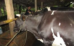 Trang trại chăn nuôi liên hoàn mang lại hiệu quả kinh tế