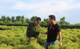 Tốt nghiệp đại học về quê trồng đinh lăng thu tỷ đồng/năm