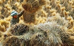 """Doanh nghiệp Việt khai thác """"mỏ vàng"""" bị bỏ quên từ phế phẩm của hạt gạo"""