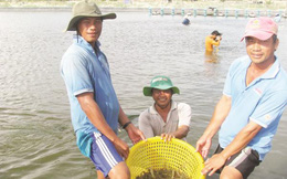 Xuất khẩu thủy sản vững vàng mục tiêu 8 tỷ USD