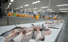 Lo ách tắc cá tra xuất sang Mỹ