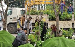 Cận cảnh hoa anh đào trước giờ khai mạc Lễ hội hoa tại Hà Nội