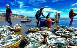 Financial Times: EU cho biết Việt Nam thể hiện nỗ lực chống đánh bắt hải sản trái phép