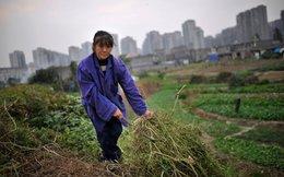 Siêu thành phố - Kỳ tích 100 năm của Trung Quốc